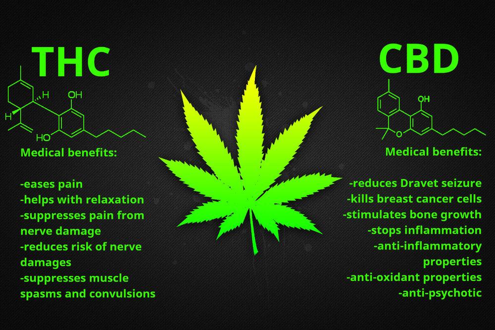 cbd vs thc magic weed blog